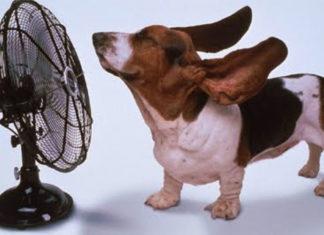 Calor e umidade também afetam nossos pets
